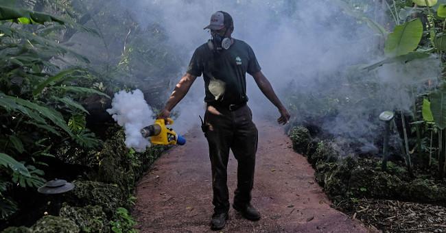 Sức khỏe đời sống-FDA cho phép dùng muỗi biến đổi gene để chống dịch Zika tại Mỹ