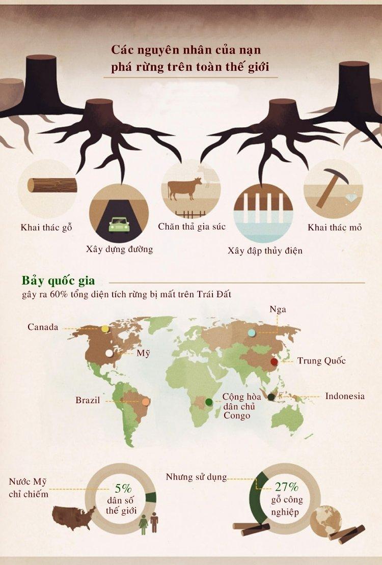Khai thác gỗ, xây dựng đường, chăn thả gia súc.... là những nguyên nhân của nạn phá rừng trên toàn thế giới.