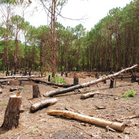 Hiện trạng phá rừng trên thế giới