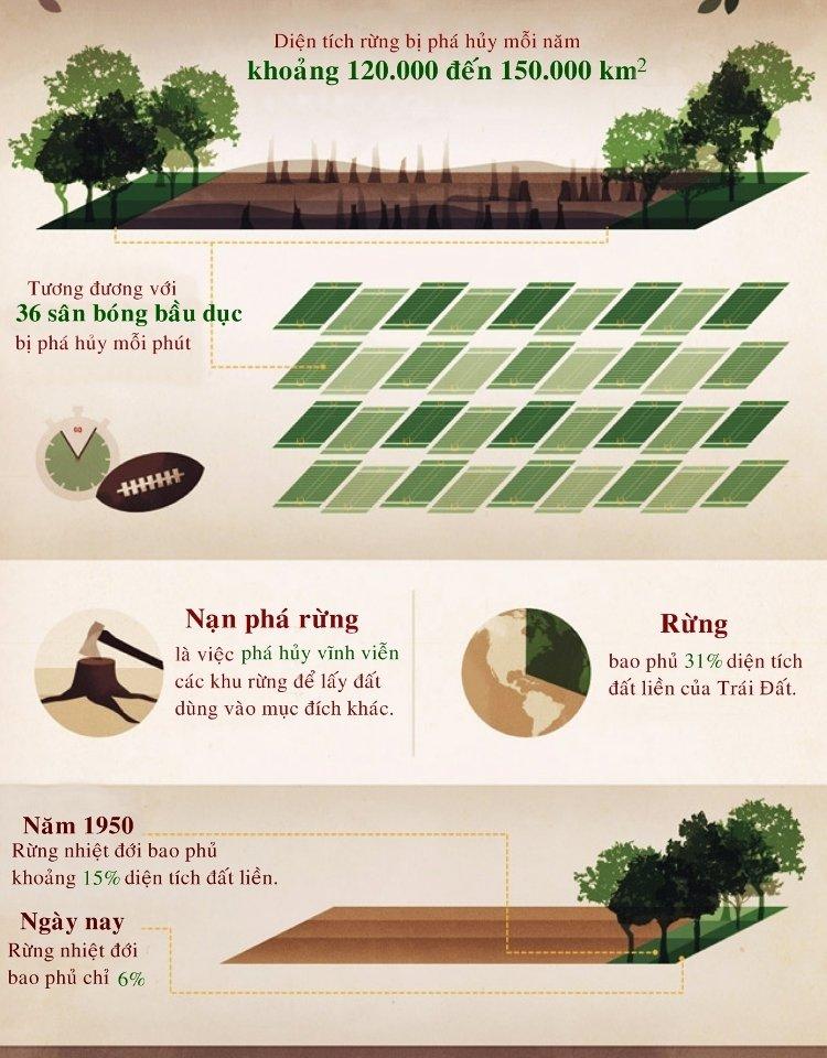Rừng bao phủ 31% diện tích Trái Đất.