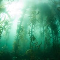Những rừng cây kỳ lạ nhất trên Trái Đất
