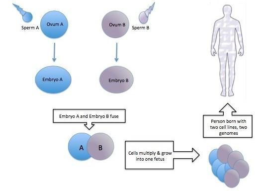 Mô tả phương thức trộn lẫn tế bào 2 loài khác nhau.