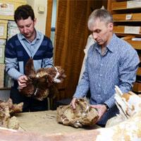 Các nhà khoa học Nga tìm thấy loài khủng long mới ở Kemerovo, Siberia