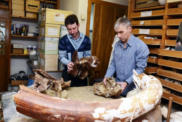 Các nhà khoa học đang nghiên cứu các mẫu hóa thạch.