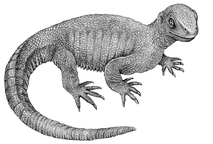 Hóa thạch của loài Pappochelys mới được tìm ra trở thành mắt xích còn thiếu giữa 2 loài sinh vật cổ đại khác.