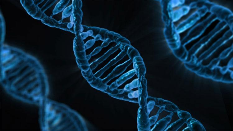 DNA - câu trả lời cho ngành di truyền học.