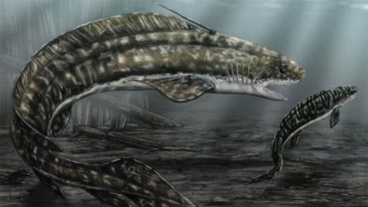 Cá mập Orthacanthus phải ăn thịt con khi không tìm được thức ăn.