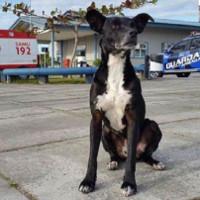 Chó chờ trước cửa bệnh viện nơi chủ qua đời từ 8 tháng trước