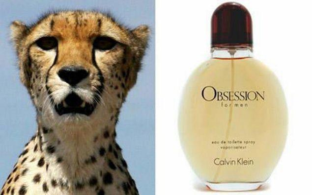 Nếu tới khu vực có những con thú này thì tuyệt đối không dùng nước hoa Obsession.