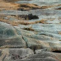 Báo hoa tàng hình trên bãi đá