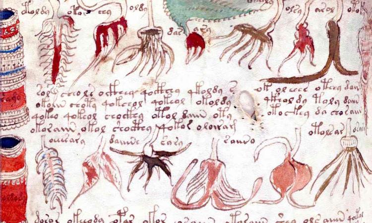 Các văn tự và hình ảnh chưa được giải mã trong cuốn Voynich