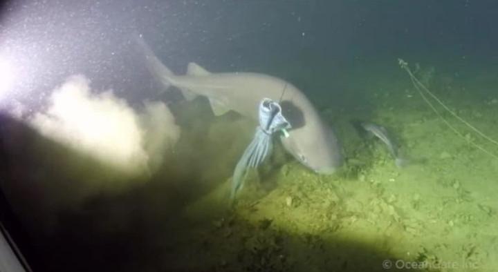 Các nhà khoa học OceanGate vừa bắt gặp một con cá mập 6 mang vô cùng hiếm thấy.