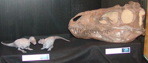 Hộp sọ CMNH 7541.