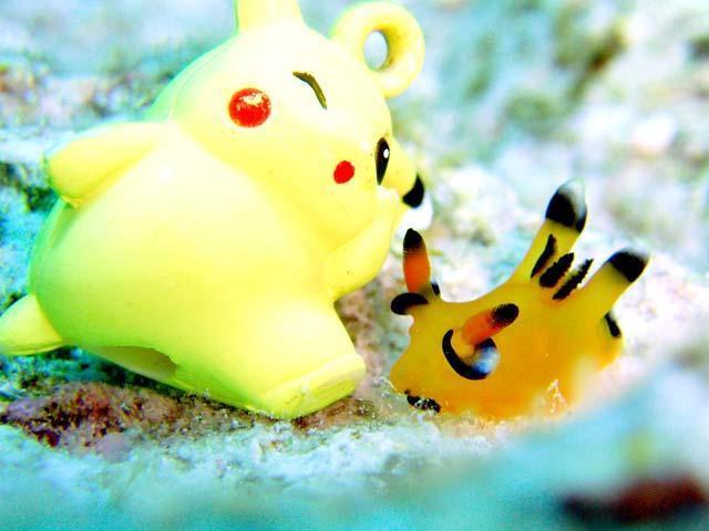 Loài sên biển có hình dáng giống nhân vật Pikachu trong trò chơi Pokémon Go.