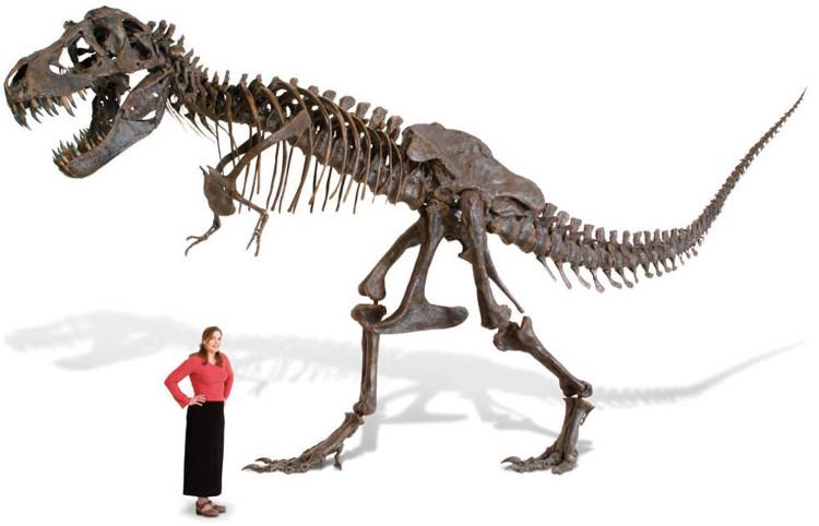 So sánh kích cỡ của T. rex và người.