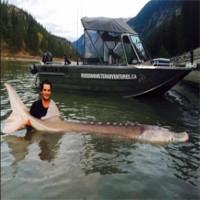 """""""Yêu quái"""" cá tầm 80 tuổi khổng lồ đã bị bắt sống sau nhiều năm lẩn trốn"""