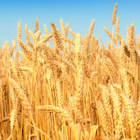 Phương pháp quang hợp giúp ngành nông nghiệp phát triển