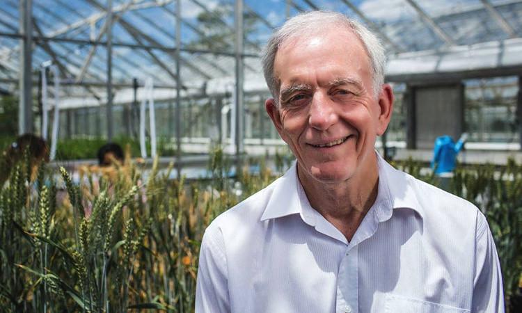 """Giáo sư Robert Henry: """"Phương pháp quang hợp mới được phát hiện có trong hạt lúa mỳ và lá là một phát minh rất hữu dụng""""."""