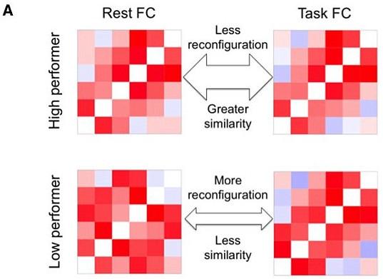 Sóng não của người thông minh lúc nghỉ ngơi và lúc hoạt động thì giống nhau.