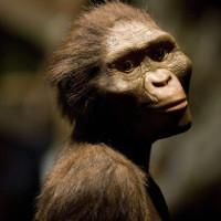 Tìm ra nguyên nhân cái chết của Lucy -Tổ tiên loài người