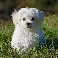 Tìm thấy bằng chứng cho thấy chó hiểu được tiếng người