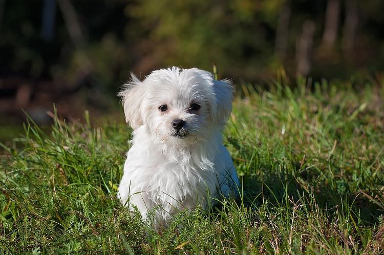 Loài chó có thể có thể chú ý hơn tới những gì con người nói và những thứ họ làm.