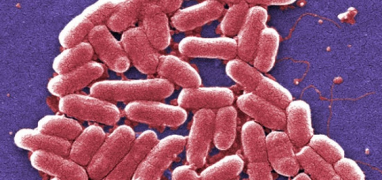 Chuỗi siêu khuẩn E. coli kháng được hai loại kháng sinh dự phòng cuối cùng đã được tìm thấy tại Mỹ.