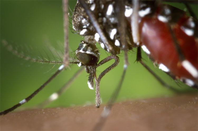 Trái Đất ấm lên, điều kiện lý tưởng cho virus Zika phát triển.