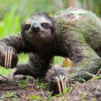"""5 bật mí trớ trêu về chuyện """"đi cầu"""" trong thế giới động vật"""