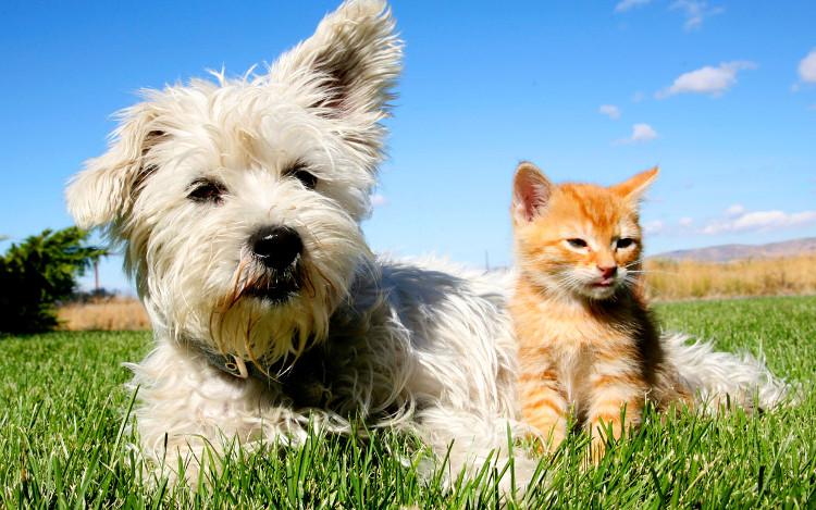 Chó với mèo nếu được nuôi cùng nhau từ nhỏ có thể thân thiện với nhau khi chúng lớn lên.