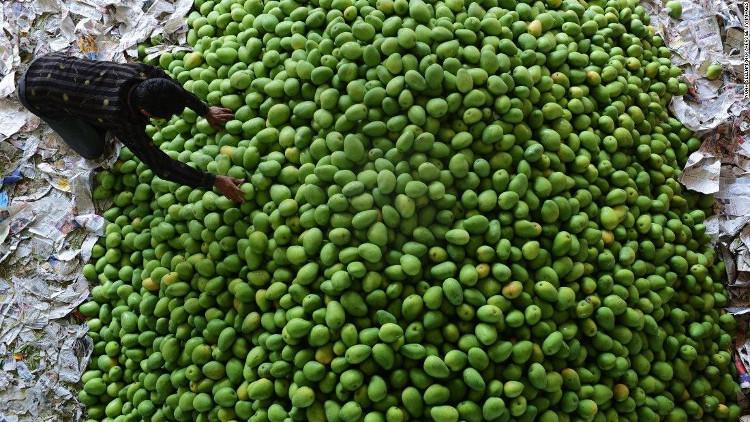 Một nông dân Ấn Độ đang kiểm tra chất lượng quả xoài ở Hyderabad hồi tháng 4/2016