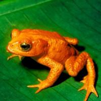 10 cuộc tuyệt chủng tự nhiên lớn nhất từ thập kỉ 90