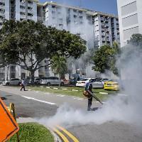 Virus Zika ở Singapore có thể tiến hóa từ chủng cách đây 60 năm