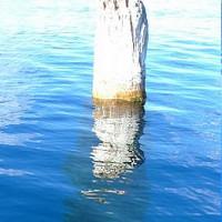 Bí ẩn thân cây khổng lồ dựng đứng giữa hồ suốt 100 năm