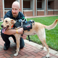 Sắp có công nghệ giúp người trò chuyện với cún yêu