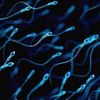 Nghiên cứu đột phá chứng minh hai đàn ông có thể có con với nhau
