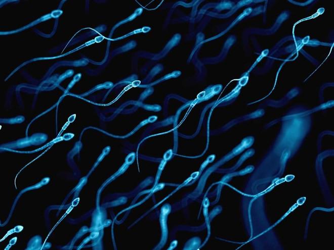 Các nhà khoa học tin rằng họ có thể tạo ra thai nhi từ tế bào da.