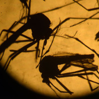 Bệnh nhân Zika thứ 4 ở Việt Nam là một người Đức