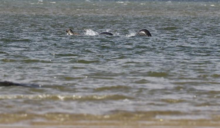 Bức ảnh Ian Bremner chụp tại hồ Loch Ness.