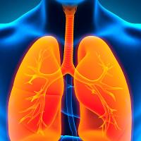 """Các nhà khoa học phát triển thành công phổi """"mini"""""""