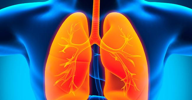 Hình ảnh phổi của con người.