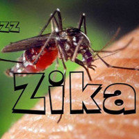 Bộ Y tế cảnh báo virus Zika đã lưu hành trong cộng đồng