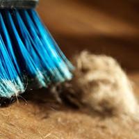 Cảnh báo: Tìm thấy 45 độc tố mới ở bụi bẩn trong nhà
