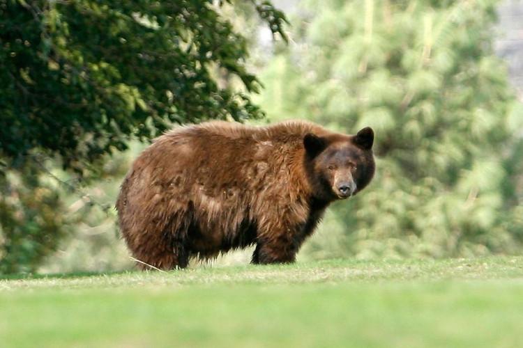 """Việc đầu tiên sau khi thức dậy của gấu chính là... """"đi nặng""""."""