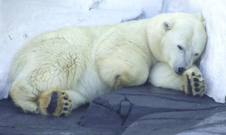 """Ngủ sấp mặt, gấu có """"ị"""" không?"""