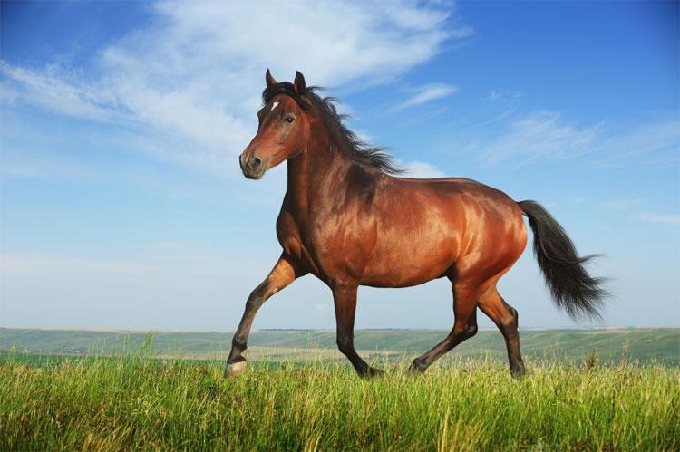 Sự lựa chọn của ngựa không phải ngẫu nhiên mà do những điều kiện cần đắp chăn hay bỏ chăn ra.