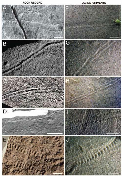 Hóa thạch này tạo nên bởi một con trilobite.