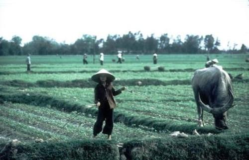 Trên một cánh đồng ngoại ô Hà Nội.