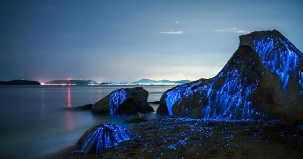 """Nhiếp ảnh gia Trevor Williams và Jonathan Galione chụp cảnh tôm phát quang trong loạt ảnh mang tên """"Lệ đá"""" vào tháng 8"""