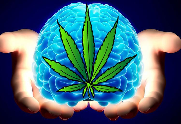 Sử dụng cần sa tác động xấu cho não